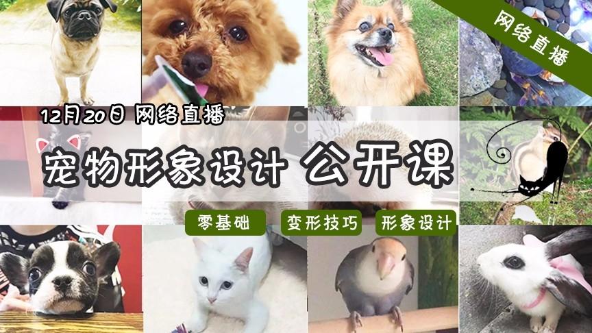 宠物形象设计公开课